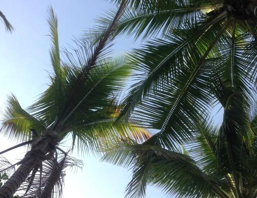 LIFESTYLE PALMTREE BEACH TRAVEL - FLIGHT OF SPICE - LIFESTYLE BLOG