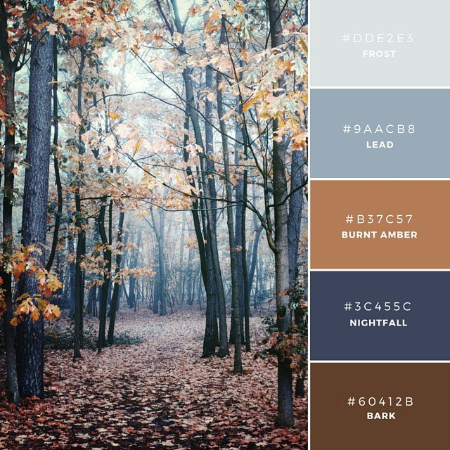 color-scheme-fall-design-school